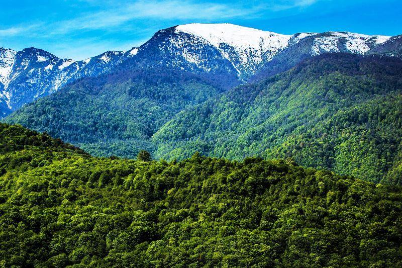 Hyrcanian Forest